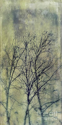 Photograph - Trees by Priska Wettstein