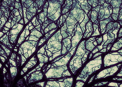 Photograph - Trees by Ranjini Kandasamy