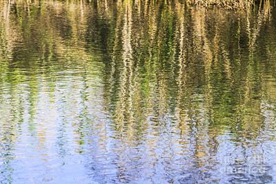 Close Focus Nature Scene Photograph - Trees Reflect In Water  by Vladi Alon