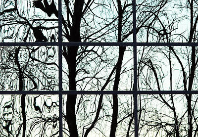 Photograph - Trees Reflected by Ethna Gillespie