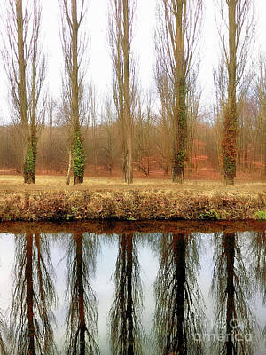 Photograph - Trees Reflected In Water by Tom Gowanlock