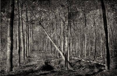 Photograph - Trees by Roberto Pagani