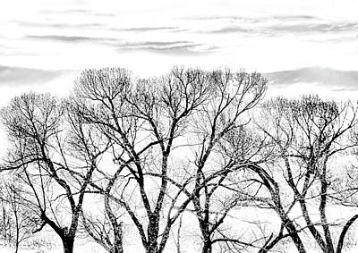 Art Print featuring the photograph Trees Silhouette Black And White by Jennie Marie Schell