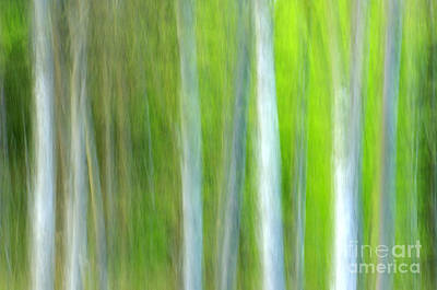 Nature Photograph - Trees by Silke Magino