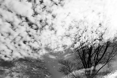 Photograph - Tree's Spirit by Munir Alawi