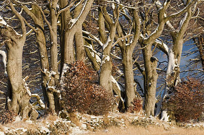 Photograph - Trees by Sue Arber