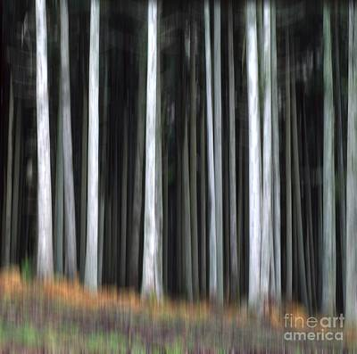 Trees Trunks Art Print by Bernard Jaubert