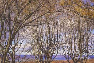 Photograph - Trees Upon The Sky by Colleen Kammerer