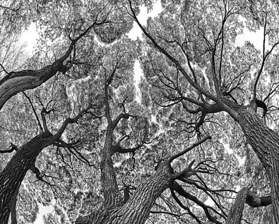 Art Print featuring the photograph Trees by Vladimir Kholostykh