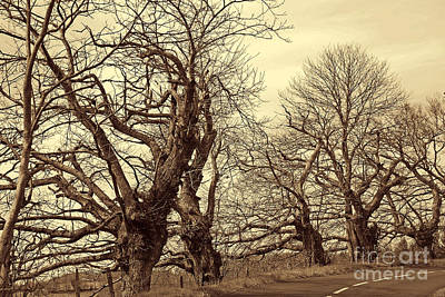 Sepia Photograph - Trees With Attitude by Rod Jones