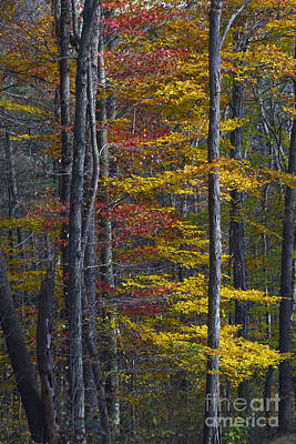Trees With Autumn Colors 8260c Art Print