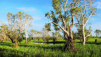 Photograph - Trees - Yellow Water, Kakadu N P by Lexa Harpell