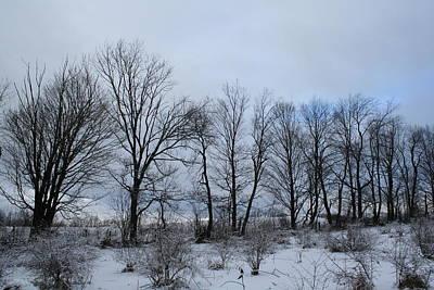 Photograph - Treescape by Aggy Duveen