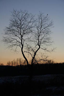 Photograph - Treescape At Dusk by Aggy Duveen