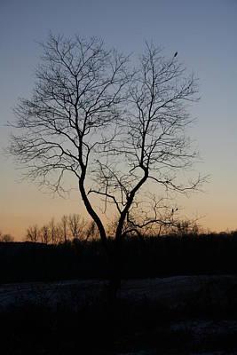 Photograph - Treescape At Dusk by Aggy Duveen