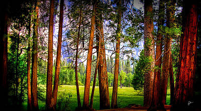 Photograph - Treescape At Yosemite Valley by TK Goforth