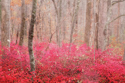 Burning Bush Photograph - Trees Dancing In The Mist by Rob Travis