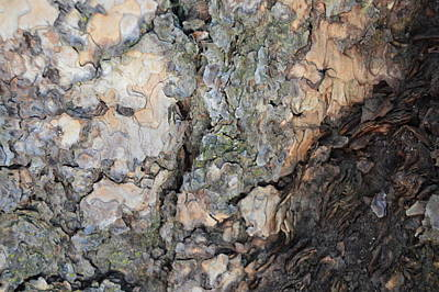 Photograph - Treetexture1 by Pic Michel