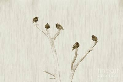 Starlings Photograph - Treetop Starlings by Benanne Stiens