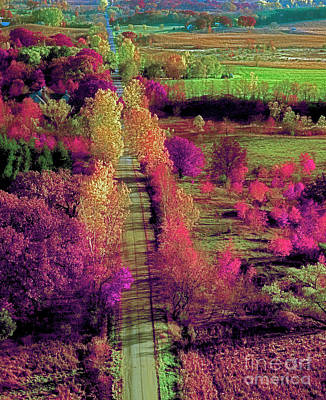 Photograph - treetop view of a Illinois country road fall by Tom Jelen