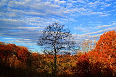 Art Print featuring the photograph Treetops Sunrise by Kathryn Meyer
