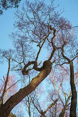 Photograph - Treetops_risinguptothesky by Ismo Raisanen