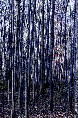 Photograph - Treez Blue by Lon Dittrick