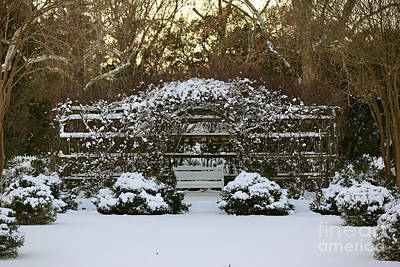 Photograph - Trellis In The Snow by Lara Morrison