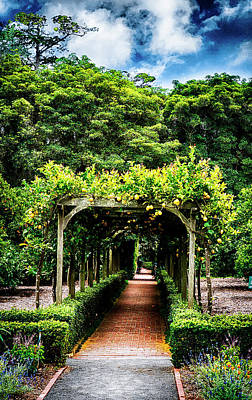 Photograph - Trellis Lotusland by Joseph Hollingsworth