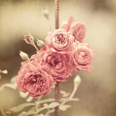 Trellis Roses Art Print