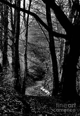 Photograph - Trepidation Trail by Baggieoldboy
