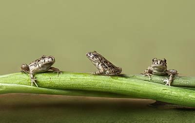 Amphibians Photograph - Tres En Rana by Javier Senosiain