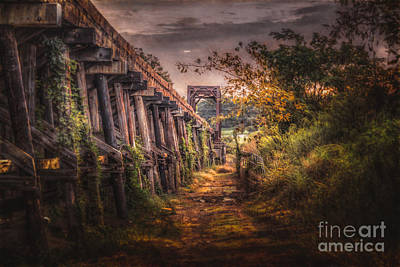 Photograph - Tressel by Larry McMahon