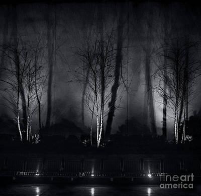 Photograph - Tri-birch In Monochrome by James Aiken