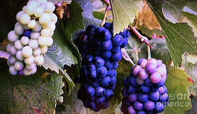 Blue Grapes Photograph - Tri-color Grapes by Linda Phelps