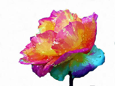 Photograph - Tri Color Rose by Joseph Frank Baraba