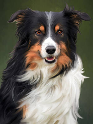Tri Colored Border Collie Portrait Art Print