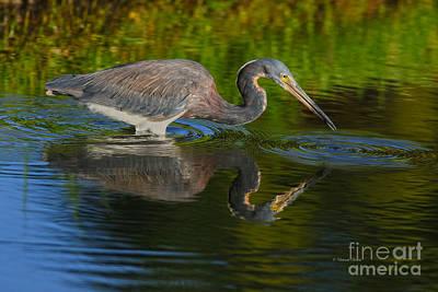 Photograph - Tri Colored Fishing by Deborah Benoit
