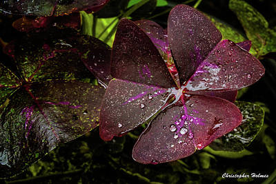 Photograph - Tri-magenta by Christopher Holmes