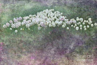 Tulip Art Photograph - Triangle Of White Tulips By Kaye Menner by Kaye Menner