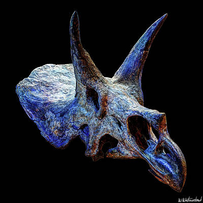 Photograph - Triceratops Horridus Skull by Weston Westmoreland