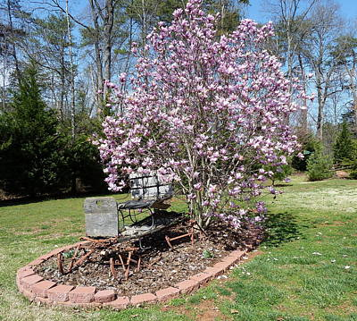 Photograph - Tricia's Sleigh - Spring by Joel Deutsch