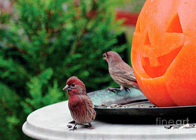 Photograph - House Finches Trick Or Treating by Patricia Youngquist