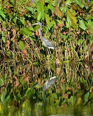Photograph - Tricolored Heron And Reflection by Carol Bradley