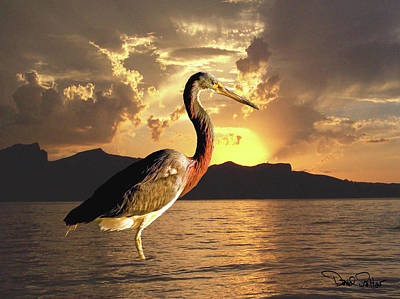Tricolored Heron At Sunset Print by David Salter