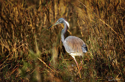 Photograph - Tricolored Heron by David A Lane