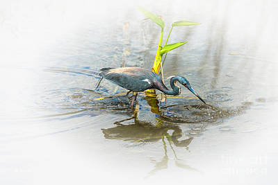 Photograph - Tricolored Heron  by Rene Triay Photography
