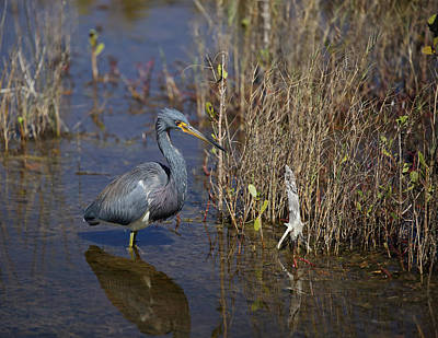 Photograph - Tricolored Heron Wading by Jean Clark