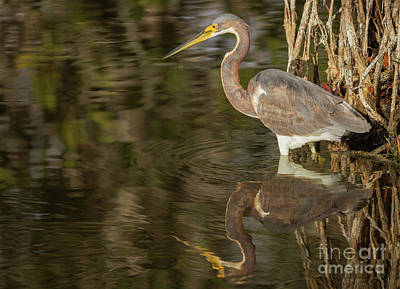 Photograph - Tricolored Reflections by David Cutts