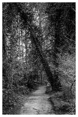 Photograph - Trilha--bosque Do Silencio-campos Do Jordao-sp by Carlos Mac